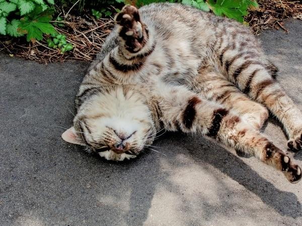「あら~猫ちゃん!ニャンニャンニャン?(こんなところでなにしてるの?)」