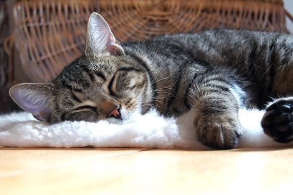 ネコのいる家に遊びに行ったときの苦悩、ある?