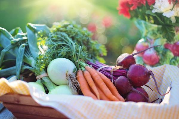 野菜、自分で作ってみたいけど…