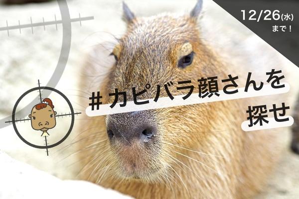 動物公園ご招待券、またはAmazonギフト券が当たる! プレゼントキャンペーン