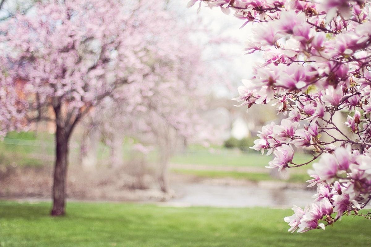 春を感じることといえば?