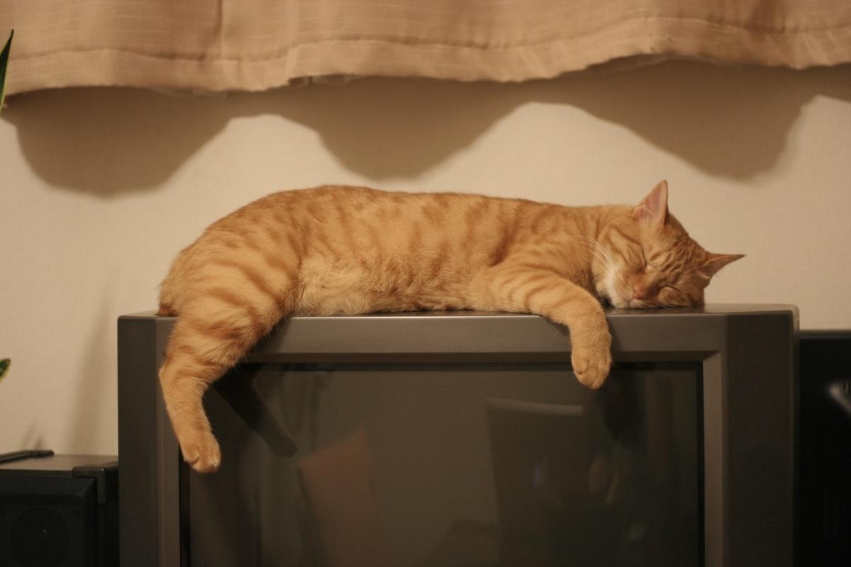 みなさんの家のネコとテレビの関係は……?