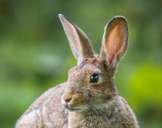 ウサギ顔と相性の良い相手は?
