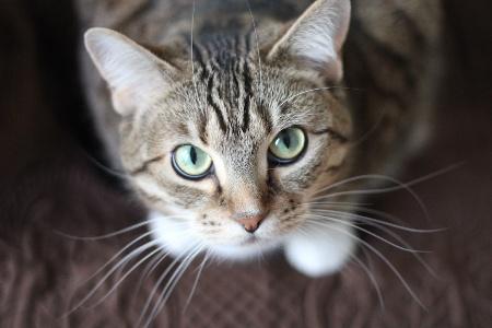 ネコ顔と相性の良い相手は?
