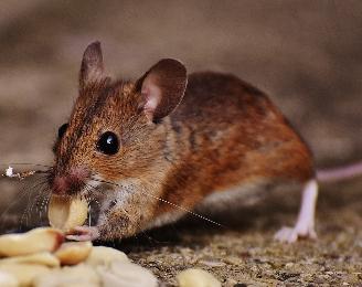 ネズミ顔と相性の良い相手は?