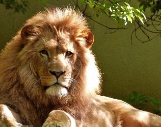 ライオン顔と相性の良い相手は?