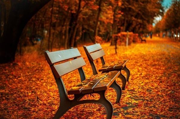 秋だからこそ楽しめる、オススメのデートプラン